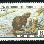 1961. 7 - 28 января. Фауна СССР. Бурый медведь. Сертификат! [2445A_Gamb] 4