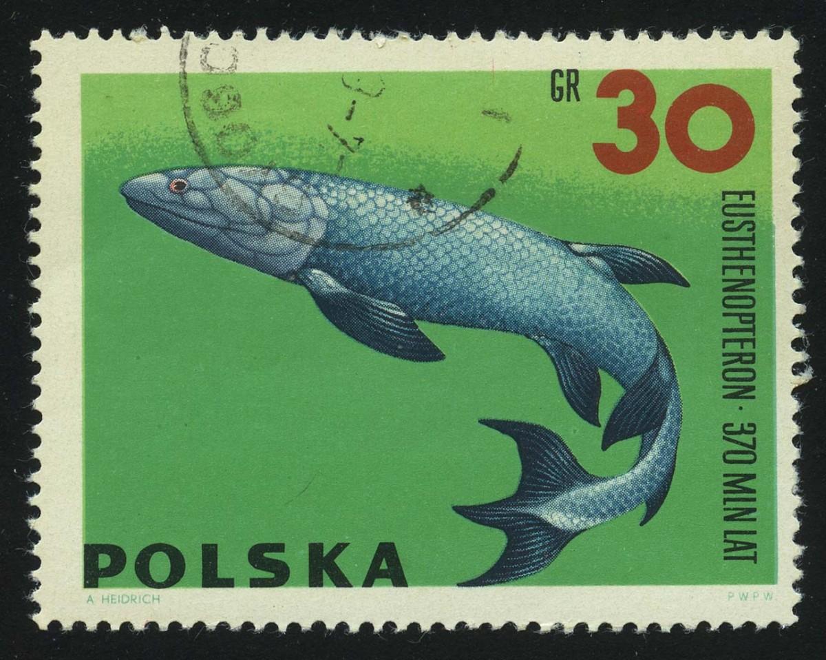 1966. Польша. Eusthenopteron, (//)** [PL1649] 1